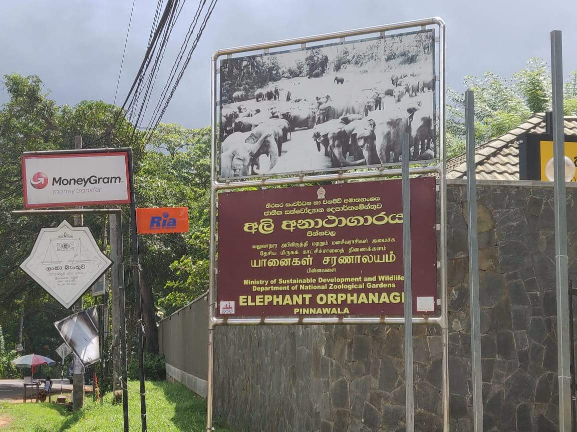 pinnwalaelephantorphanagesrilanka (13).jpg