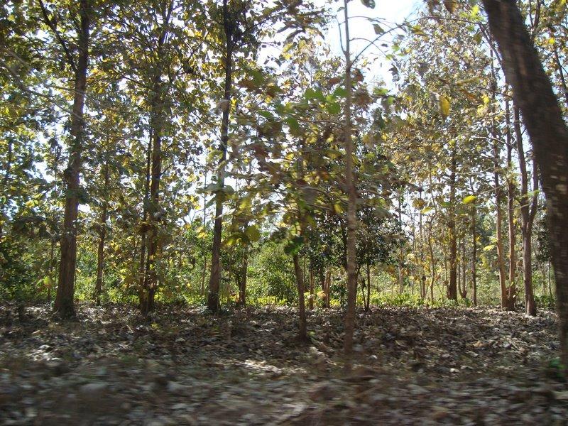 Wood%20(Jungle)%20of%20Corbett%2002.jpg
