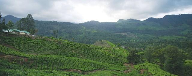Visit to Thalayar Tea Estate Munnar / Kerala