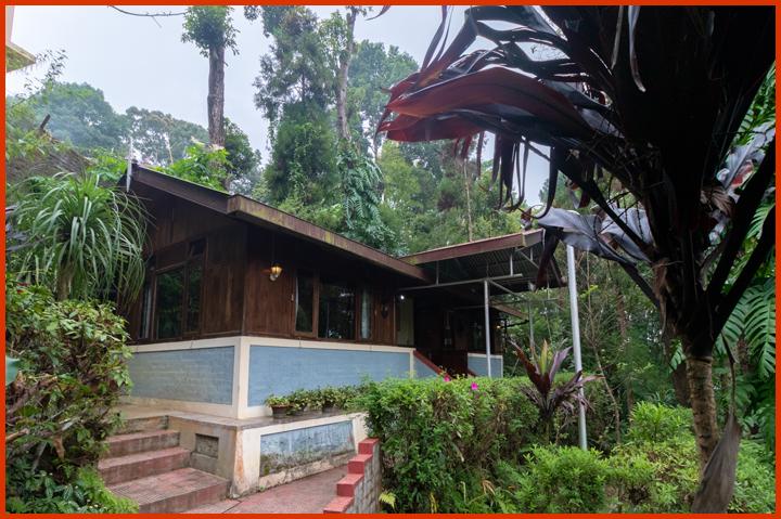 Tree-tops-cottage.jpg