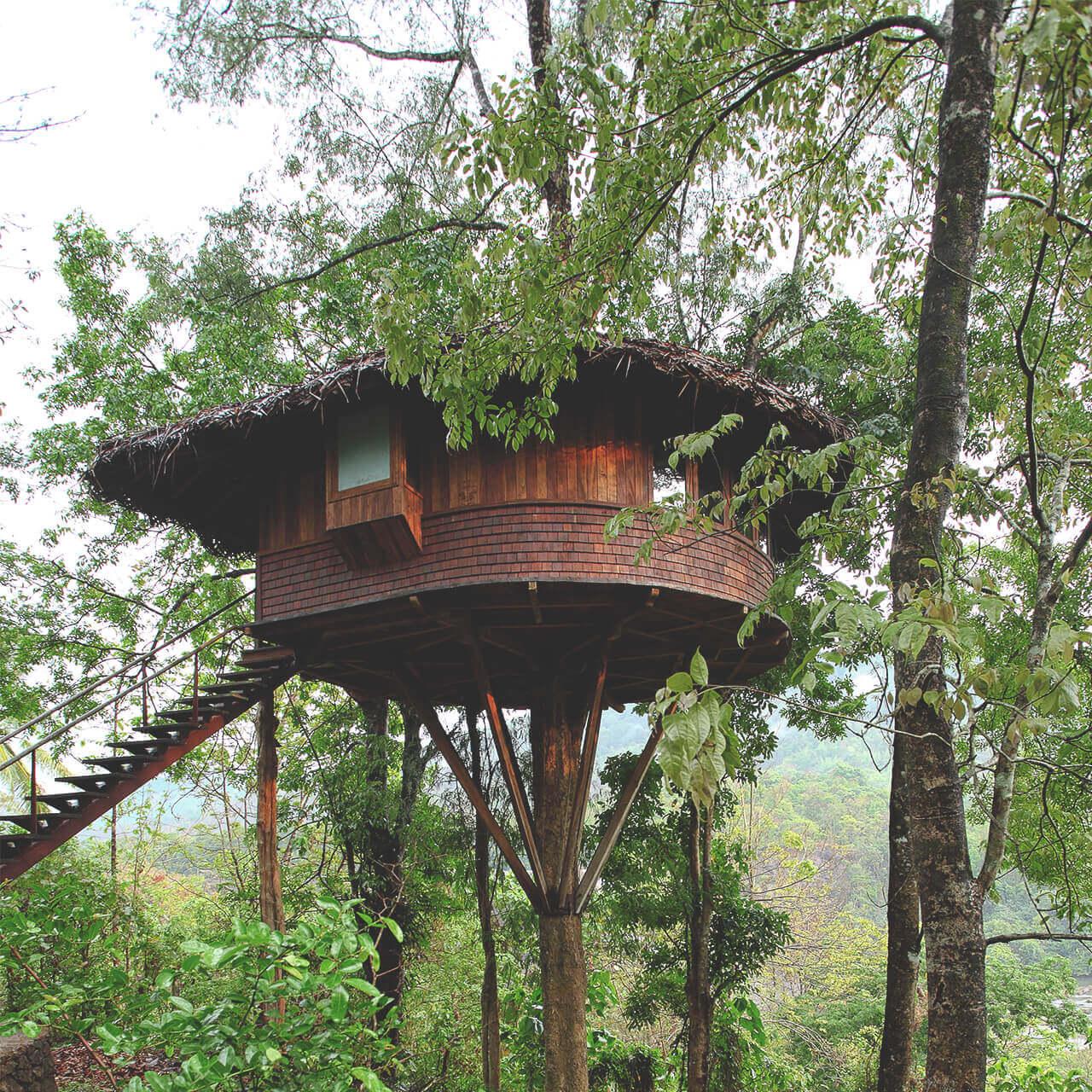 rainforestthissur%20(6).jpg